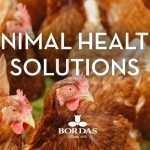 solution-animal-health-bordas